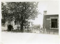 Dining hall and fig tree c1940